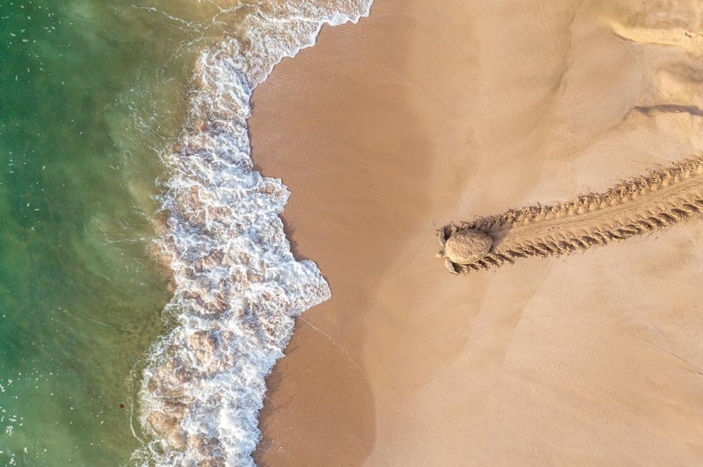 Ảnh đạt giải nhất đời sống hoang dã là của tác giả Qasim Al Farsi ghi lại cảnh một con rùa xanh trở về biển sau khi đẻ trứng. Ảnh chụp trên bờ biển Oman (một quốc gia nằm ở duyên hải đông nam của bán đảo Ả Rập).