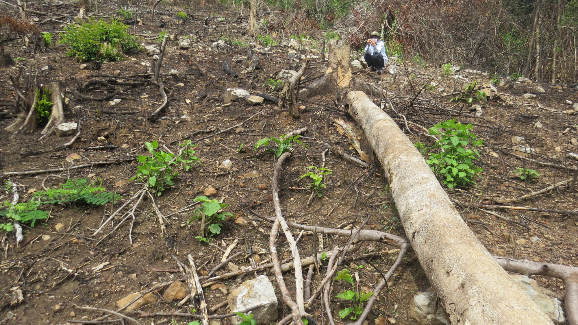 Rừng cây to bị chặt hạ làm rẫy