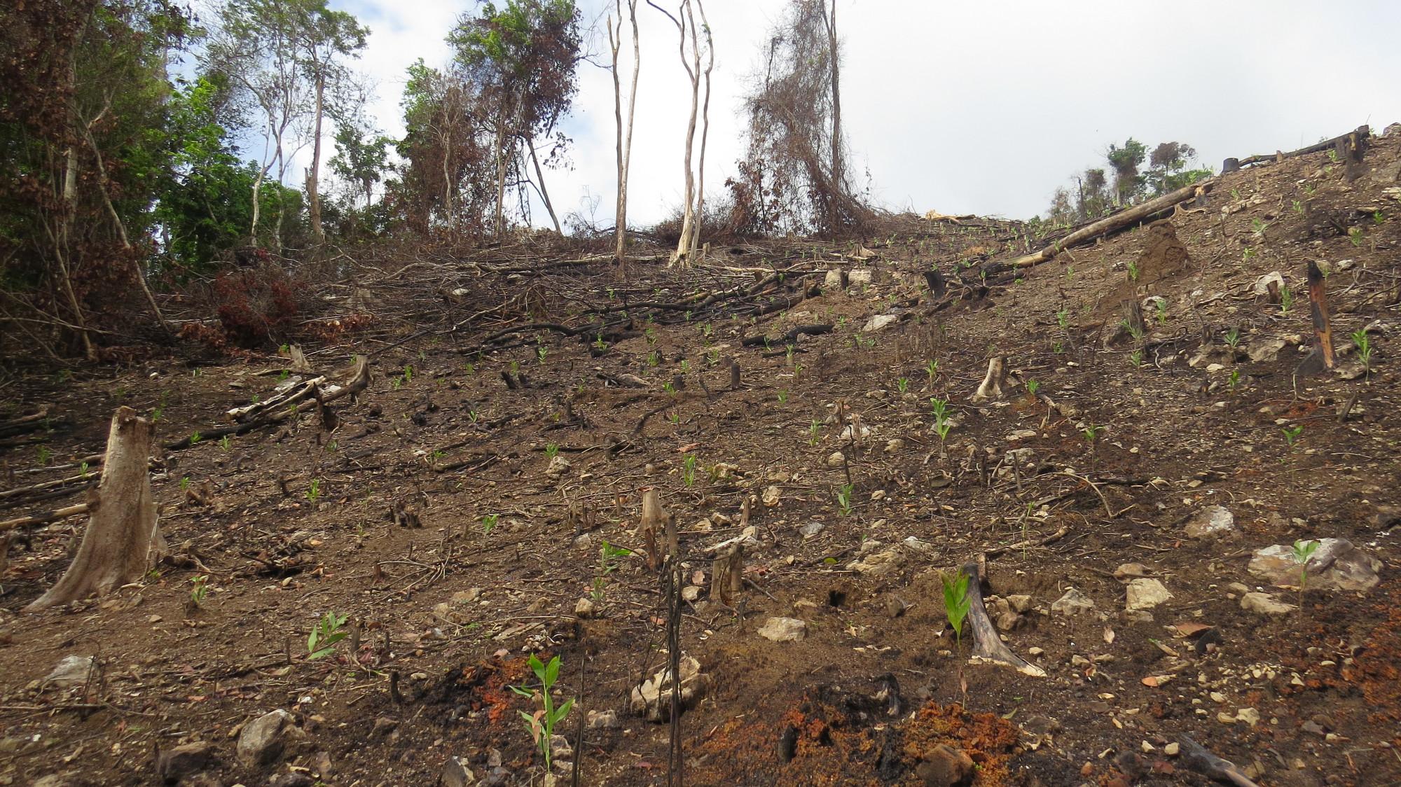 Cơ quan chức năng đang vào cuộc điều tra chuẩn bị khởi tố vụ án 1 vụ phá rừng để tìm đối tượng.