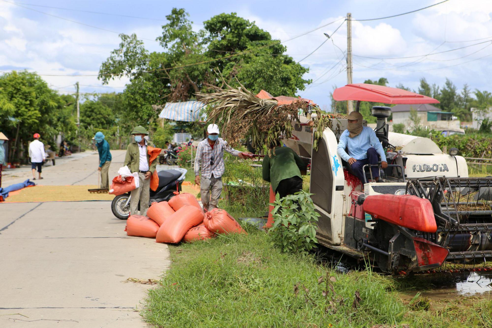 Nông dân Hà Tĩnh tranh thủ gặt lúa trước khi bão số 5 đổ bộ