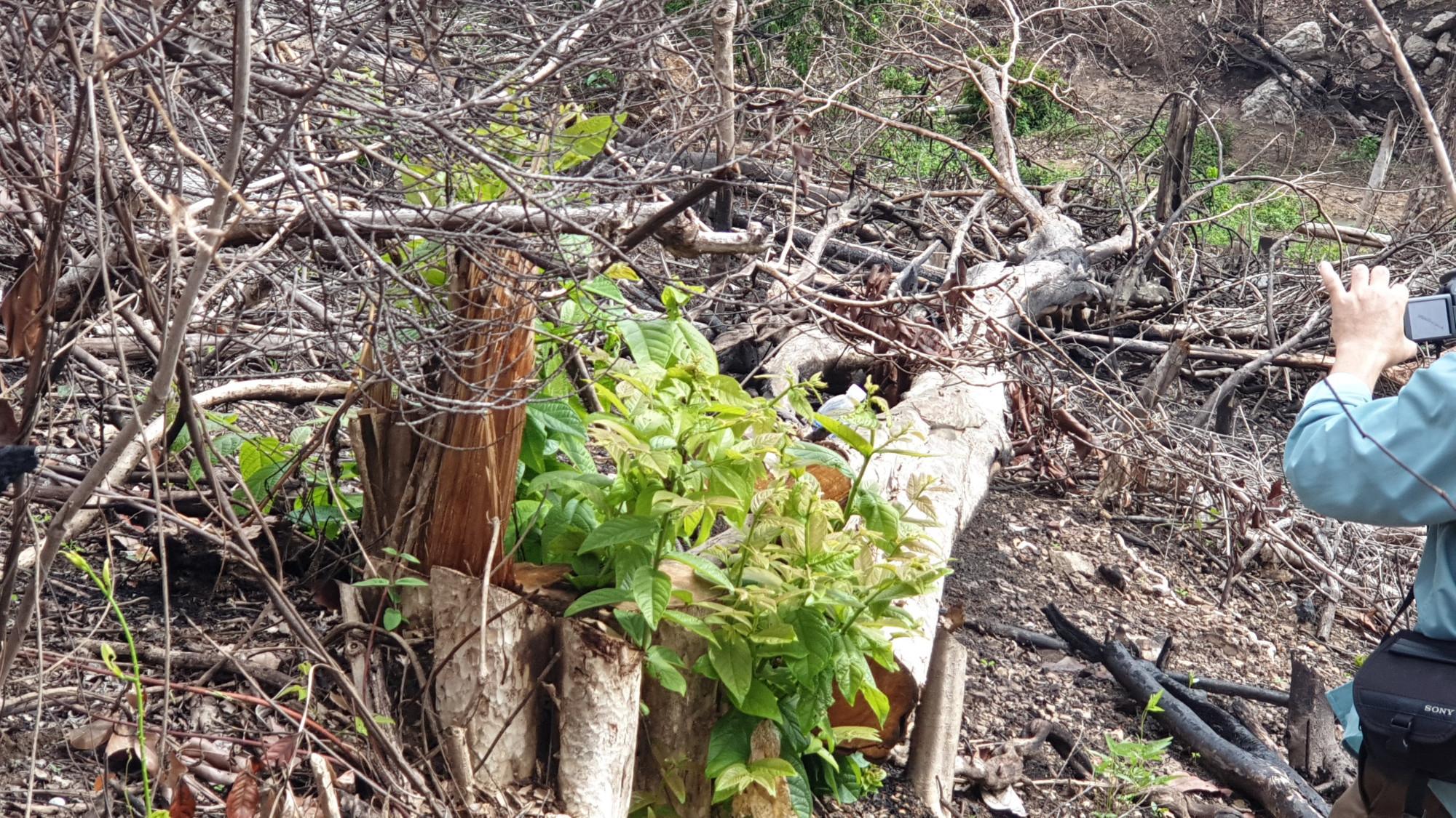 Hiện trường phá rừng thôn Tân Hội, xã Sơn Hội, huyện Sơn Hòa, tỉnh Phú Yên