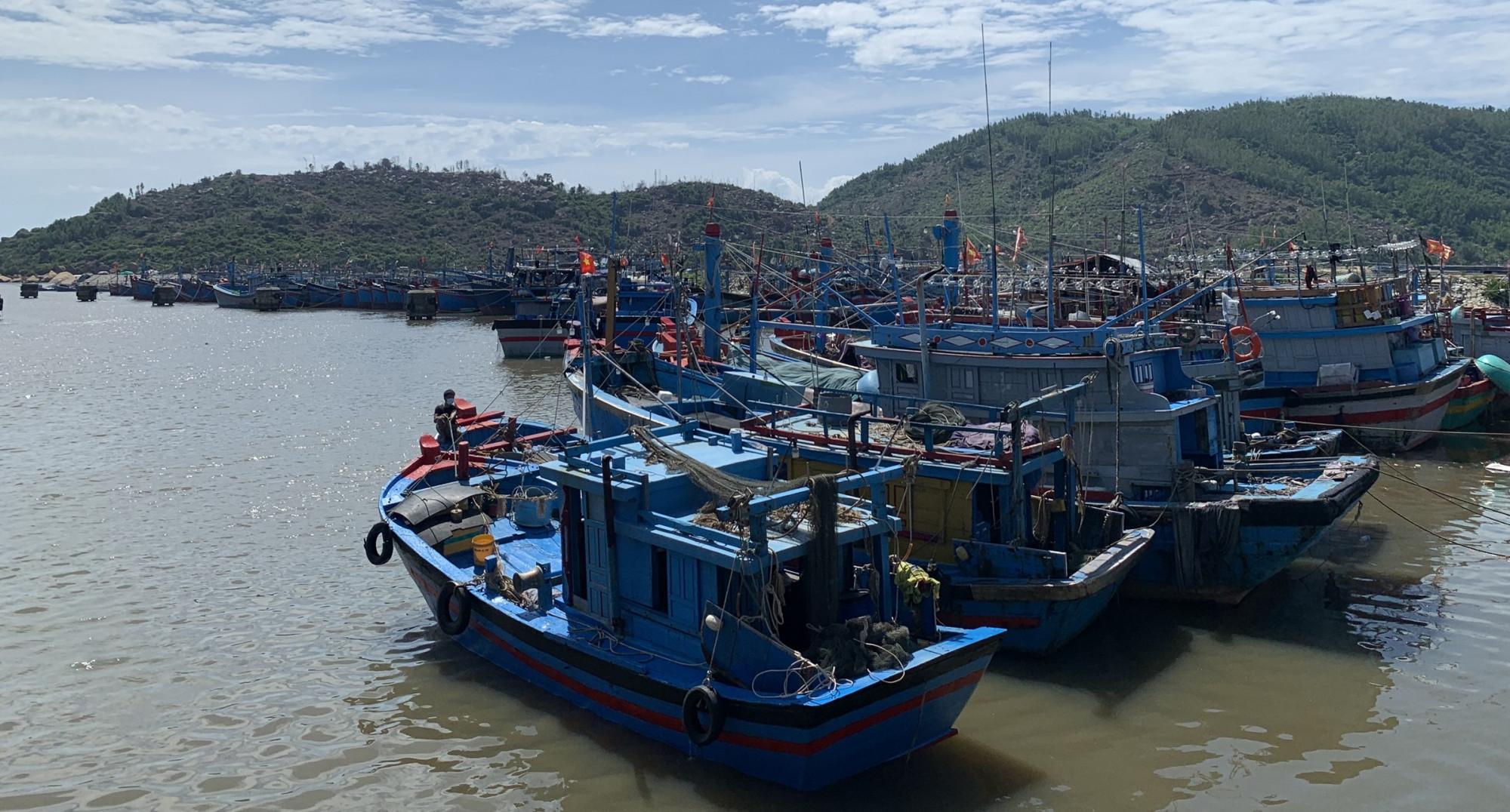 tạm dừng hoạt động tất cả cảng cá, bến cá ở Quảng Ngãi cho đến khi có thông báo mới