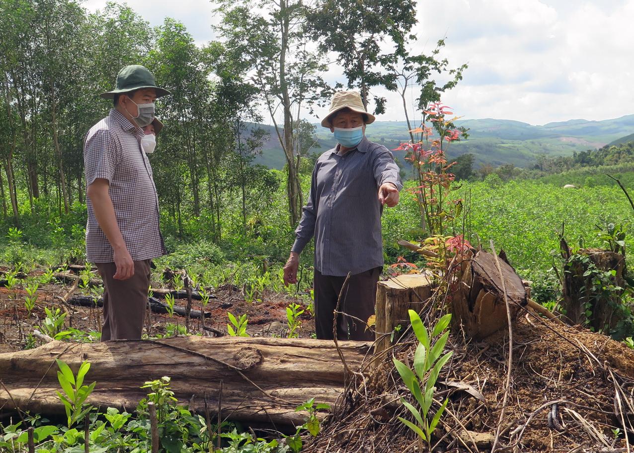 Ông Trần Hữu Thế, chủ tịch UBND tỉnh Phú Yên (bên trái) kiểm tra hiện trường vụ phá rừng ở huyện Sơn Hòa