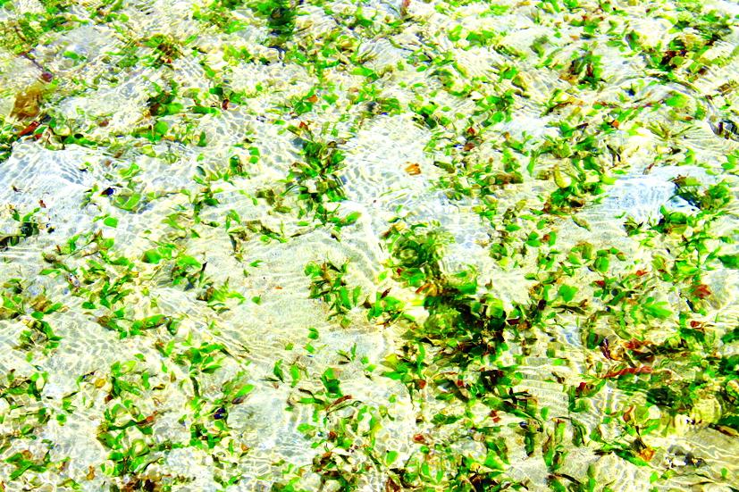 Rong ở đáy biển mơn man theo từng bước chân du khách