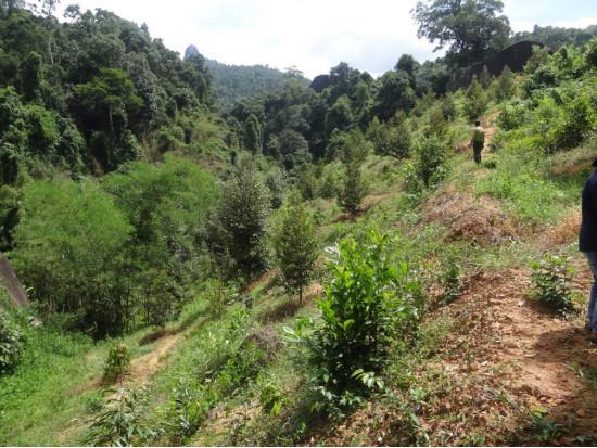 Khu vực diện tích rừng bị giảm tại dự án Đại Tùng Lâm Hoa Sen của Tập đoàn Hoa Sen.