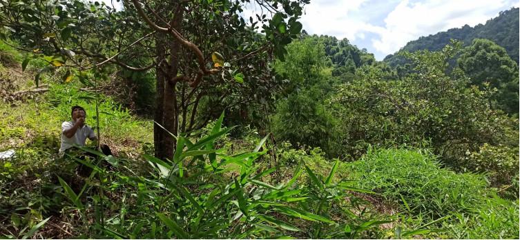 Lực lượng chức năng kiểm tra hiện trạng rừng tại khu vực được xác định mất rừng.