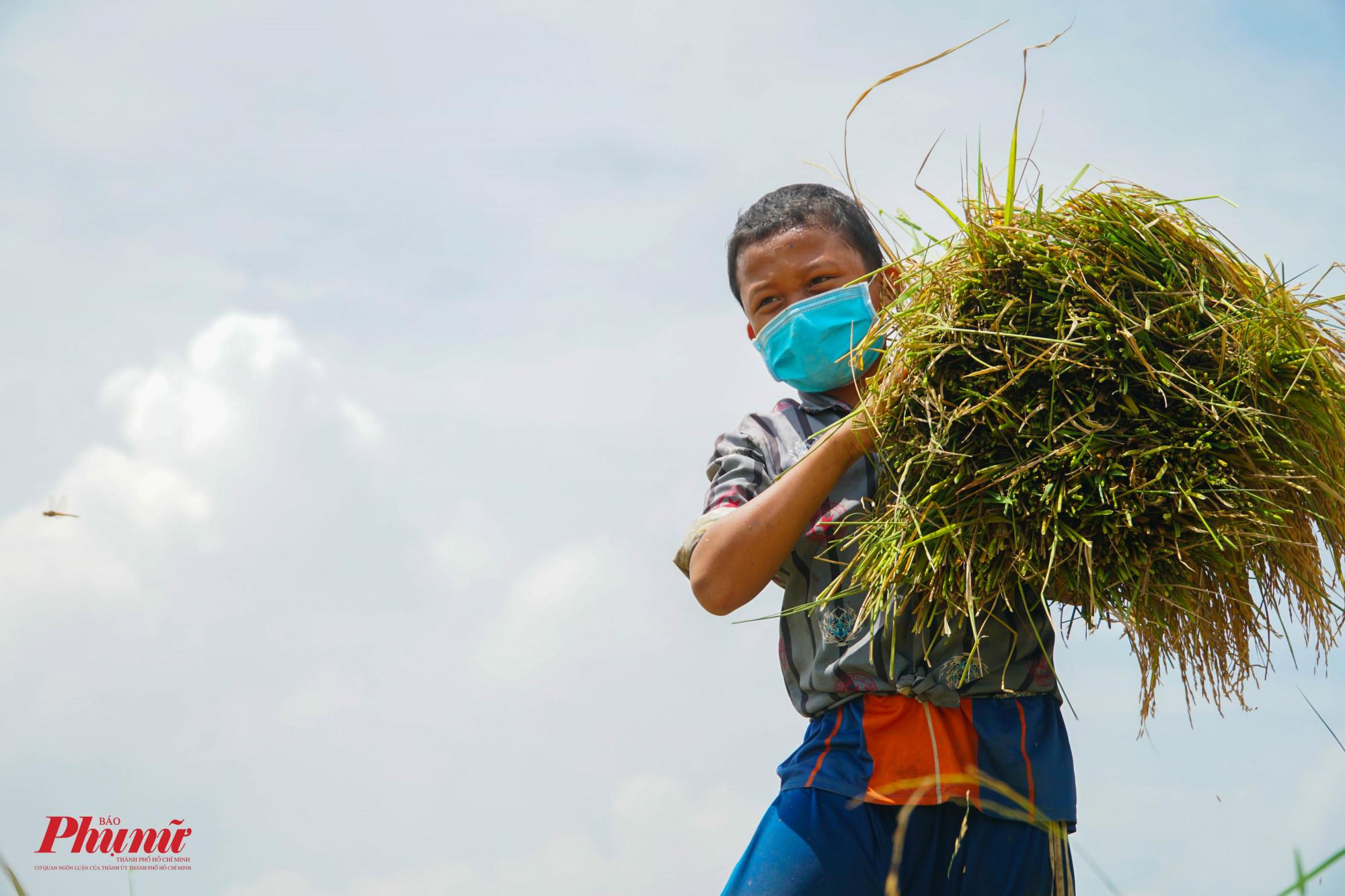 Những đứa trẻ phụ bố mẹ thu gom lúa sau khi gặt