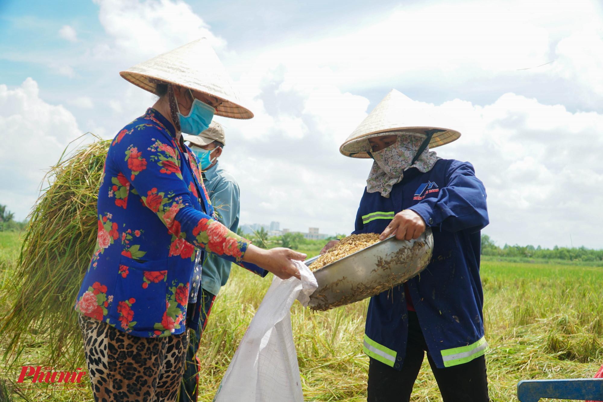 Chị em nhà chị Hương cố gắng làm xong công ruộng này để còn về sớm