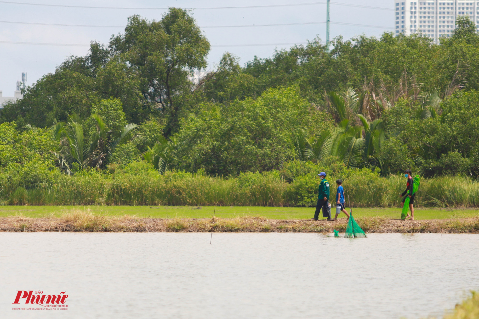 Cách điểm gặt lúa không xa, nhóm người lưới cá đang trở về nhà