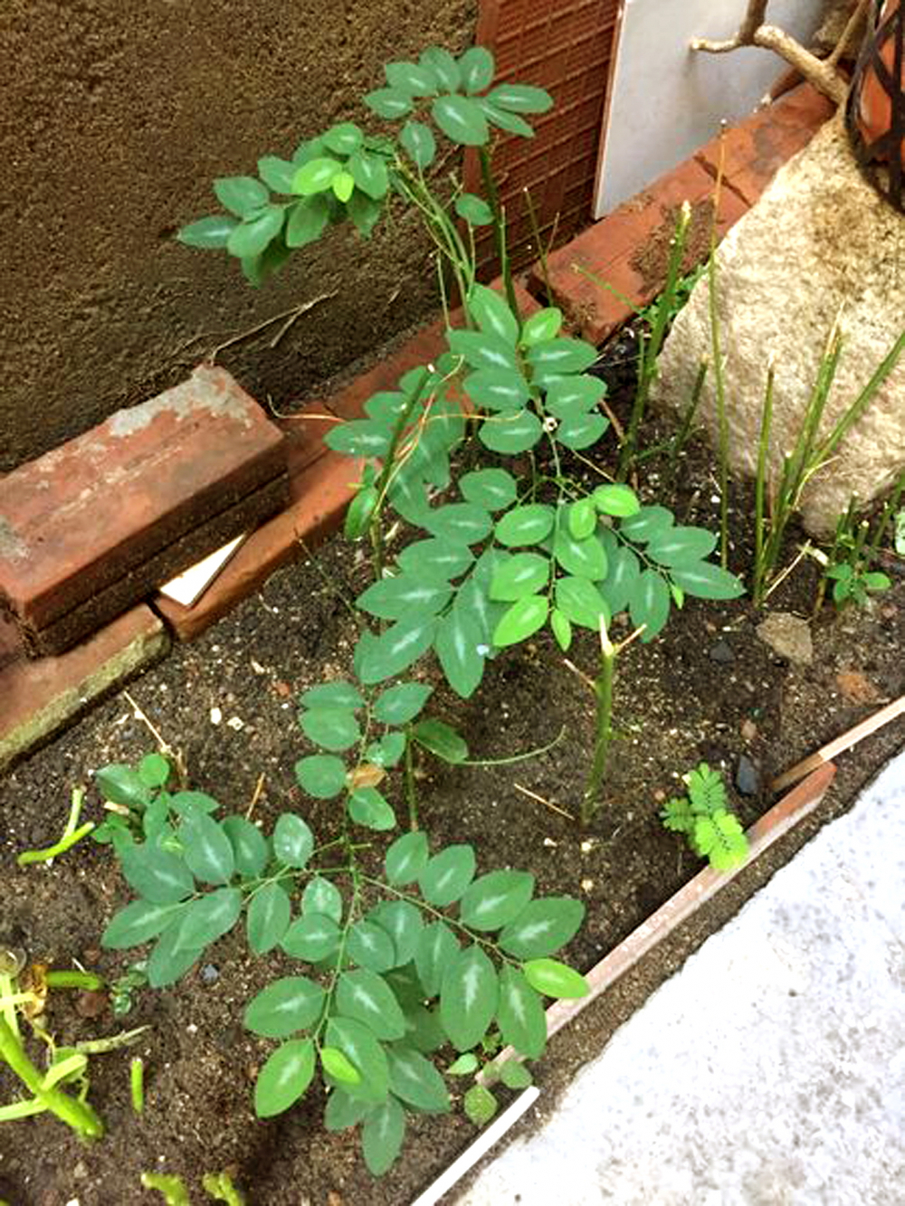 Sắc màu hy vọng trong vườn của má và những khoảng xanh nho nhỏ của tôi