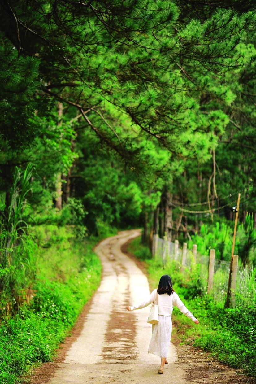 In the forest nằm ở  rừng thông, xung quanh là vườn hồng chín rộ