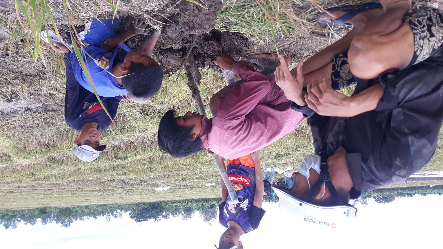 Trẻ em vùng nông thôn của TP. Cần Thơ bắt chuột trên những cánh đống đang vào vụ thu hoạch lúa Thu Đông