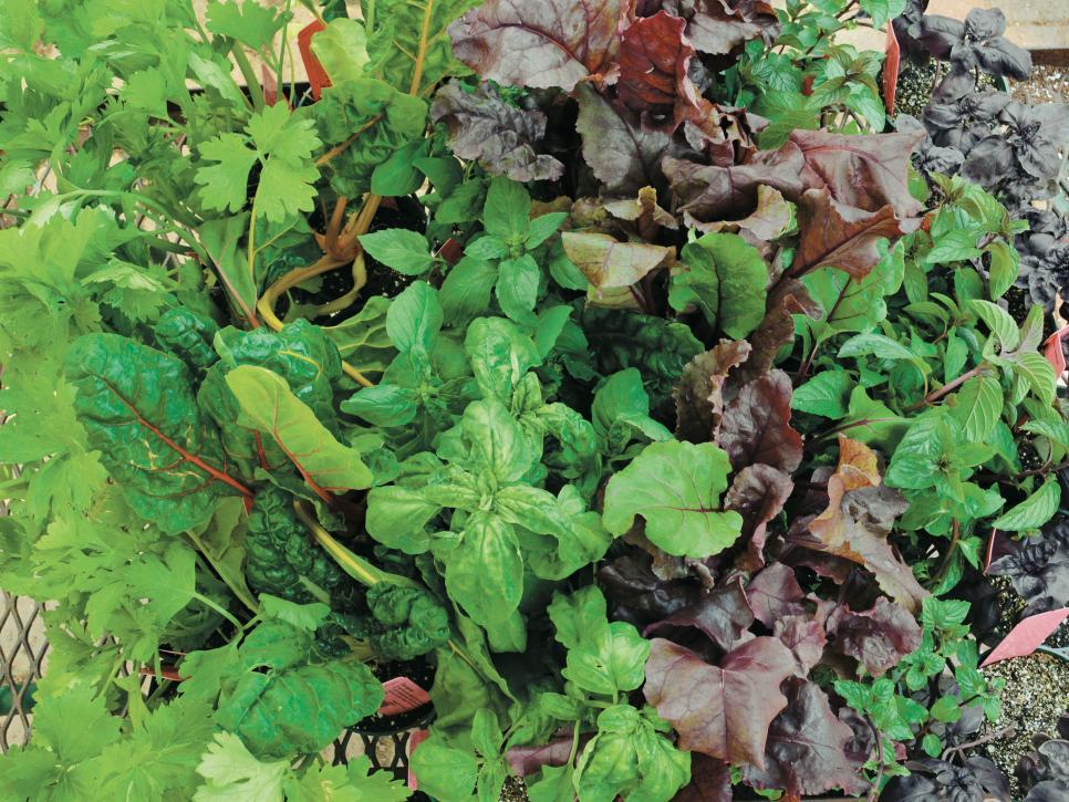 Thực hành trồng kế tiếp Tận dụng tối đa vườn rau của bạn bằng cách trồng để bạn có sản phẩm đầu ra ổn định. Khi một cây trồng trưởng thành và ngừng sản xuất, một cây trồng mới sẽ bắt đầu sản xuất. Bạn có thể trồng các giống rau chín nhanh để giữ sản lượng nông sản ổn định. Chỉ cần nhớ bổ sung cho đất của bạn một nửa inch phân trộn đã làm việc vào đất khi bạn trồng giai đoạn tiếp theo của cây trồng để giữ cho cây của bạn được cung cấp chất dinh dưỡng.