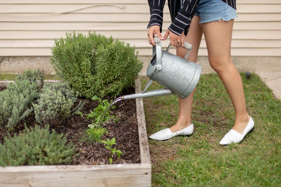 Tưới nước Vòi tưới nhỏ giọt và vòi tưới nhỏ giọt là những cách tuyệt vời để đảm bảo vườn rau của bạn được cung cấp đủ nước. Lượng nước hàng tuần được khuyến nghị là 1 inch một tuần.