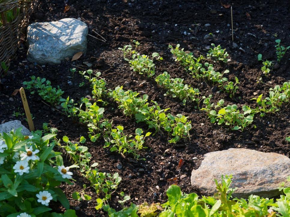 Hàng không gian vườn thích hợp Nhiều người làm vườn nghiệp dư có xu hướng trồng quá nhiều, vì vậy hãy đảm bảo chừa đủ không gian giữa các hàng trong vườn để cây không che bóng các cây bên cạnh. Các cây quá gần nhau sẽ cạnh tranh về chất dinh dưỡng và nước và dễ bị bệnh và sâu bệnh hơn. Hãy chú ý đến các yêu cầu về khoảng cách trên các gói hạt giống khi trồng khu vườn của bạn.