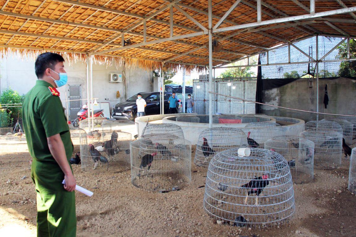 Hàng trăm con gà gọi được phát hiện trong trại gà