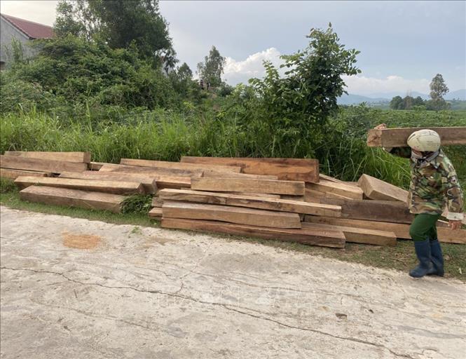Ngành chức năng phát hiện khúc gỗ hộp trong nhà và trong vườn của gia đình ông Tuất
