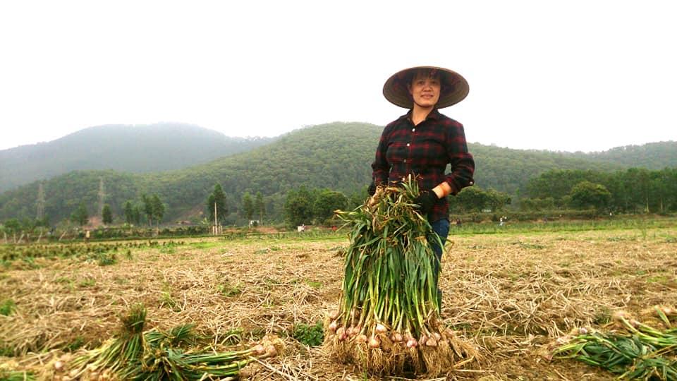 Quê tôi nổi tiếng khắp nước với nghề trồng hành