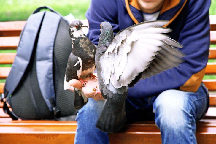 2. Cho chim ăn Cho chim bồ câu ăn là một trong những hoạt động ngoài trời yêu thích mà các gia đình hay làm mỗi khi có dịp đi chơi ngoài trời. Thật không may, hoạt động này có thể giúp con gần gũi hơn với thiên nhiên và động vật nhưng cũng chứa đầy nguy hiểm. Khả năng một con chim trong thành phố mang bệnh truyền nhiễm là cao hơn 50%. Chim bồ câu mang bệnh cảm nhiễm E.Coli và nhiều vi khuẩn liên quan đến đường hô hấp và đường ruột khác.