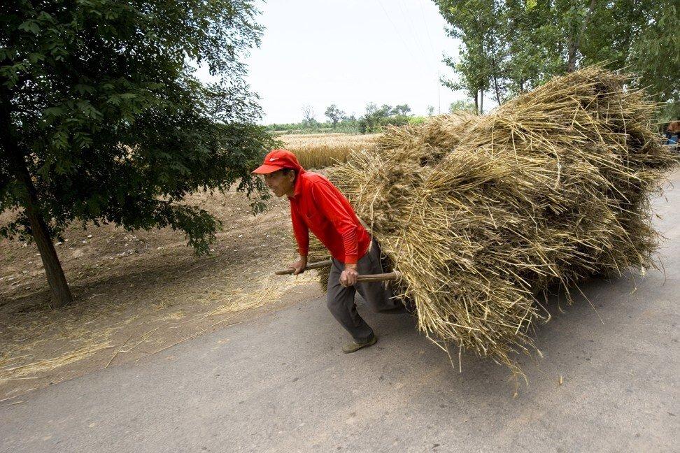 Một nam nông dân kéo xe chở lúa mì đã thu hoạch trên con đường nông thôn ở tỉnh Sơn Tây, Trung Quốc - Ảnh: SCMP/Getty Images