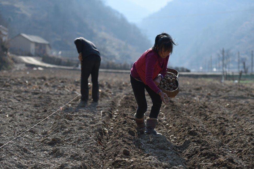 Phụ nữ nông thôn làm việc trong một trang trại ở tỉnh Hồ Bắc - Ảnh: SCMP/Getty Images