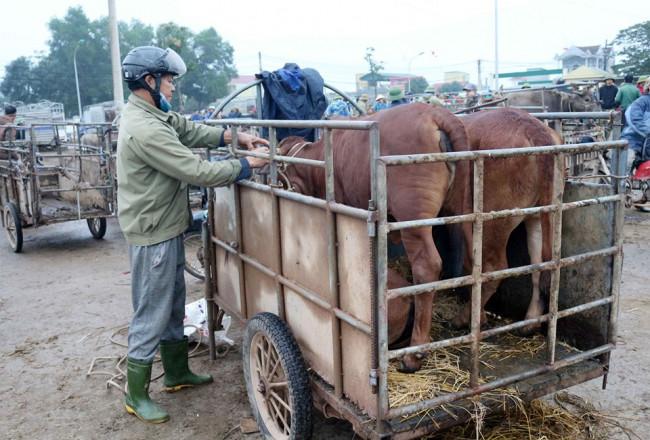 <p>Anh Nguyễn Văn Mận (ở huyện Đô Lương, tỉnh Nghệ An) cho biết, phiên chợ cuối cùng của năm nên ai cũng muốn mua may, bán đắt để có tiền mua sắm cho ngày tết, do đó người đổ về đông hơn thường lệ.</p>