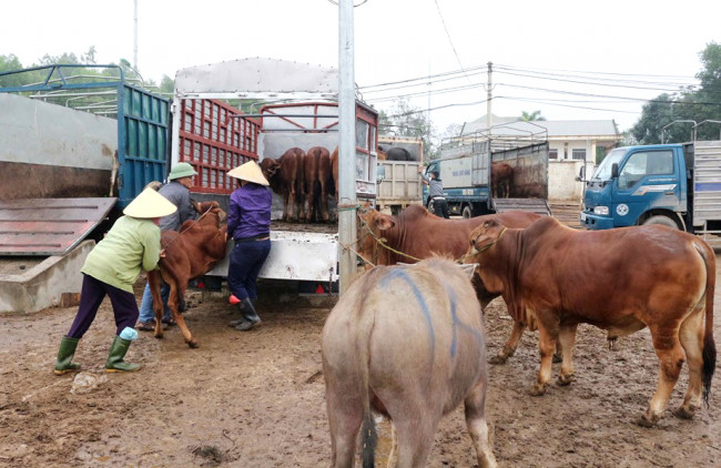 <p>Khắp các ngả đường nhộn nhịp người, xe chở trâu bò về chợ Ú để kịp cho phiên giao dịch cuối cùng của năm.</p>