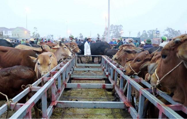 <p>Từng đàn trâu, bò được người bán dắt tay hay cột vào những chiếc xe, cột điện trên sân chợ chờ đợi chủ mới.</p>