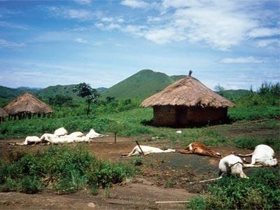 Bi an ho nuoc giet nguoi tai Cameroon