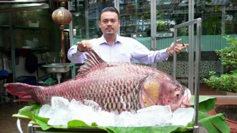 Lẩu cá 'khủng': Bạc triệu vẫn hút khách!