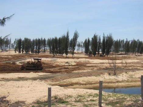 Phú Yên ngừng thi công dự án phá rừng phòng hộ làm sân golf