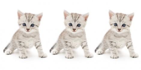 Đố vui: Tìm chú mèo khác nhất trong bầy