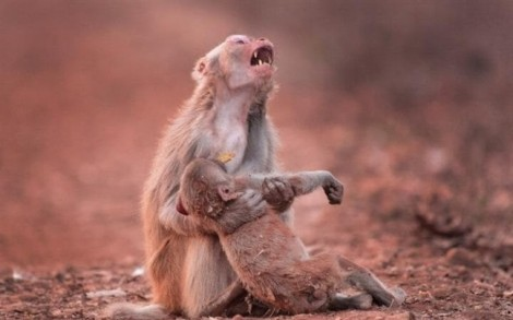 Ngày của Mẹ: Lặng người trước tình mẫu tử thiêng liêng của loài vật