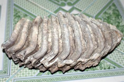 Phát hiện bộ xương hóa thạch kỳ lạ ở Phú Yên