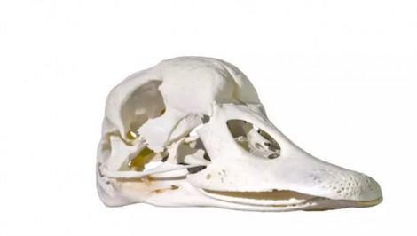 Thư giãn cuối tuần: Hộp sọ này của con vật nào?