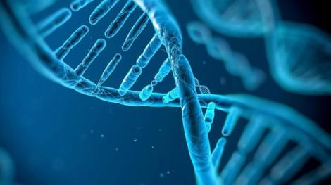 Tìm ra 40 gen liên quan đến trí thông minh
