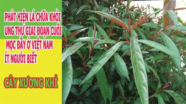 Vi sao benh nhan ung thu 'bo' benh vien, theo thay lang?