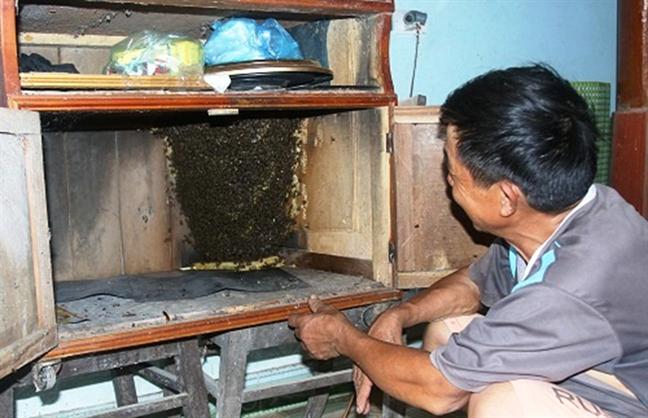 Ky la ong rung keo nhau ve nha lam to, nguoi dan duoc huong mat ong nguyen chat