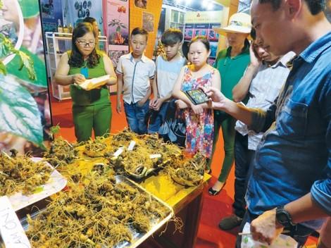 Lễ hội Sâm Ngọc Linh lần thứ I năm 2017: Giấc mơ sâm Việt