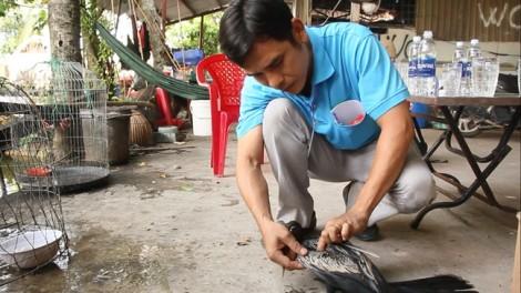 Đưa chim cổ rắn quý hiếm về Thảo Cầm Viên chữa vết thương