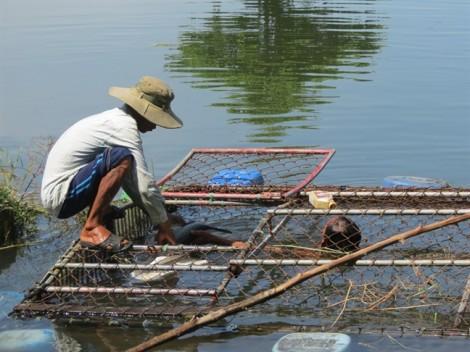 Người dân khóc ròng vì cá nuôi chết hàng loạt trên sông Bồ một cách bí ẩn