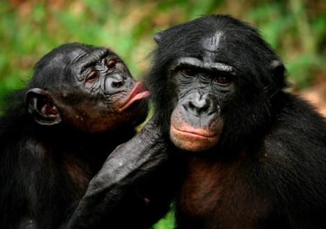 Lý giải hội chứng khỉ mê 'trai đẹp nóng bỏng', y như phụ nữ mê Brad Pitt