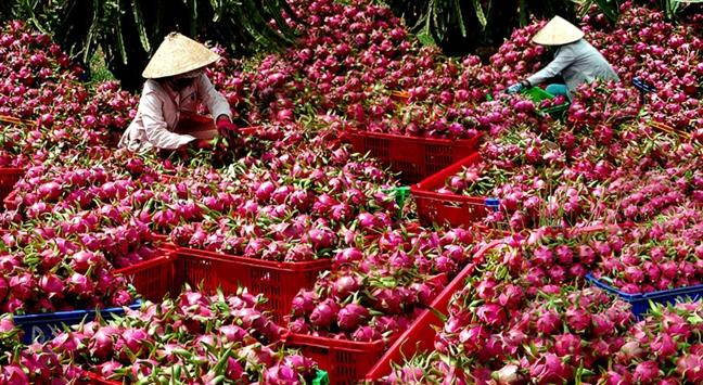 Sieu thi xuat khau hang Viet: Hang trieu USD nong san 'di' nuoc ngoai