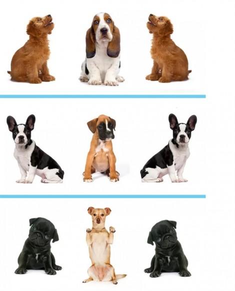 Đáp án tìm cún cưng 1