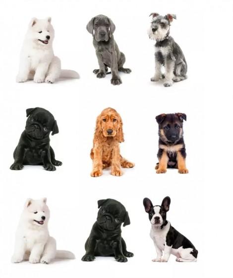 Đáp án tìm cún cưng 2