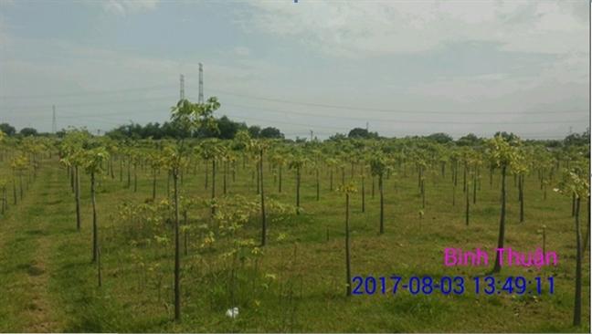 Thuc hu viec cay chet gan bãi xỉ Nhà máy Nhiẹt diẹn Vĩnh Tan 2