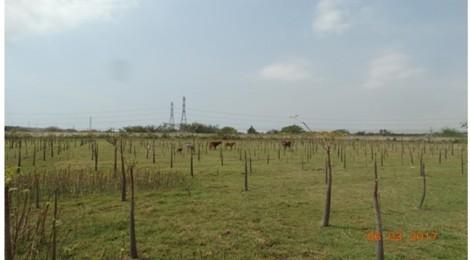 Thực hư việc cây chết gần bãi xỉ Nhà máy Nhiệt điện Vĩnh Tân 2