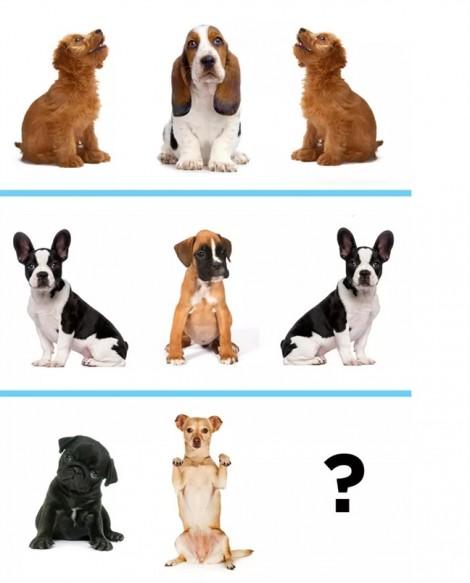 Thư giãn cuối tuần: Đoán thử chú cún dễ thương nào sẽ xuất hiện tiếp theo?