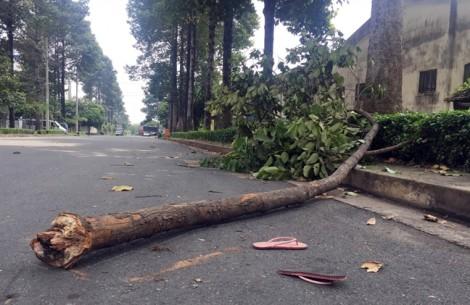 Nữ công nhân bị nhánh cây rơi trúng nguy kịch, gia đình xin đưa về nhà