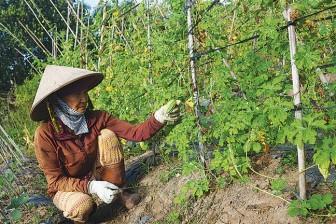 Tiêu chuẩn hữu cơ Việt Nam: Chưa hình thành đã lo 'phổ cập' dễ dãi